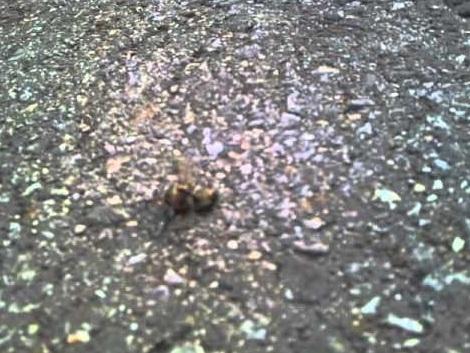 Damit es mir nicht so ergeht wie unseren Bienen...Jogging ohne Reue durch unsere Parkanlagen in München